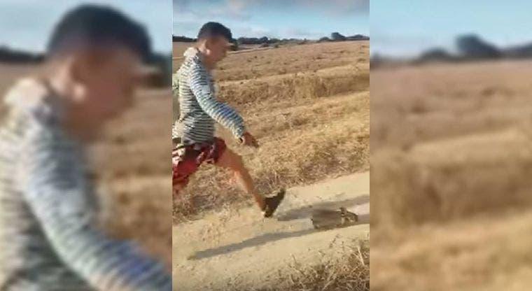 Indignación en redes sociales por hombre que pateó a un pequeño conejo