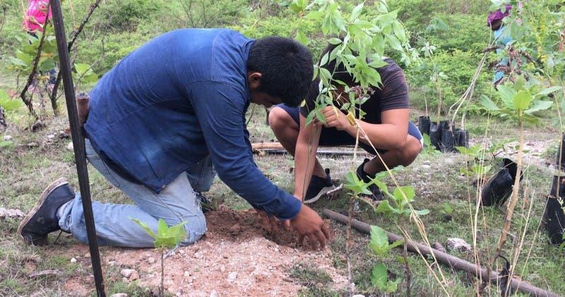 Celebran Día del Árbol con 250 mil ejemplares reforestados en Morelos