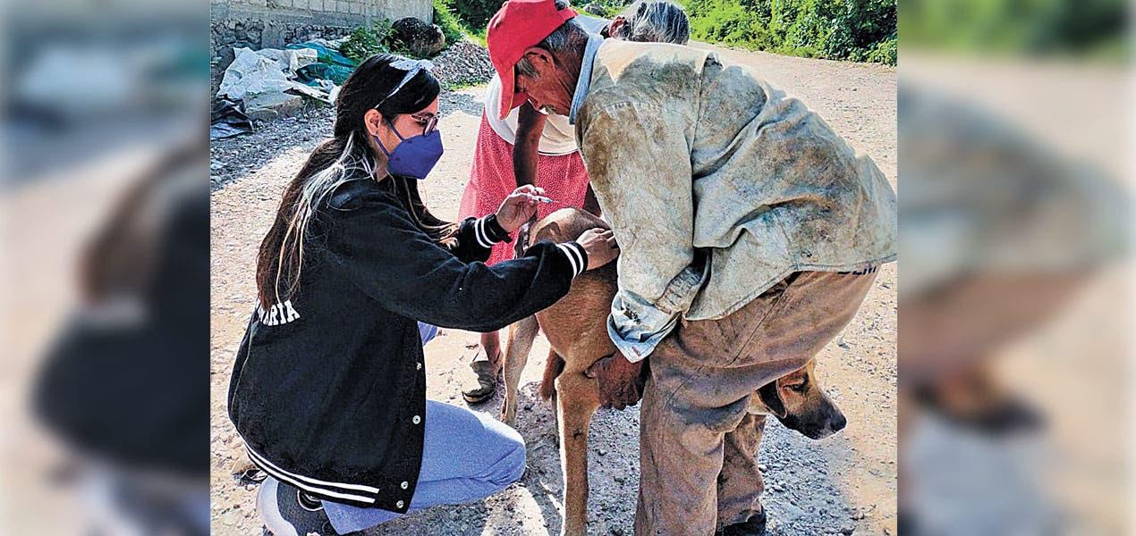 Vacunan a 118 perros para que no enfermen a especies nativas de Sierra Montenegro