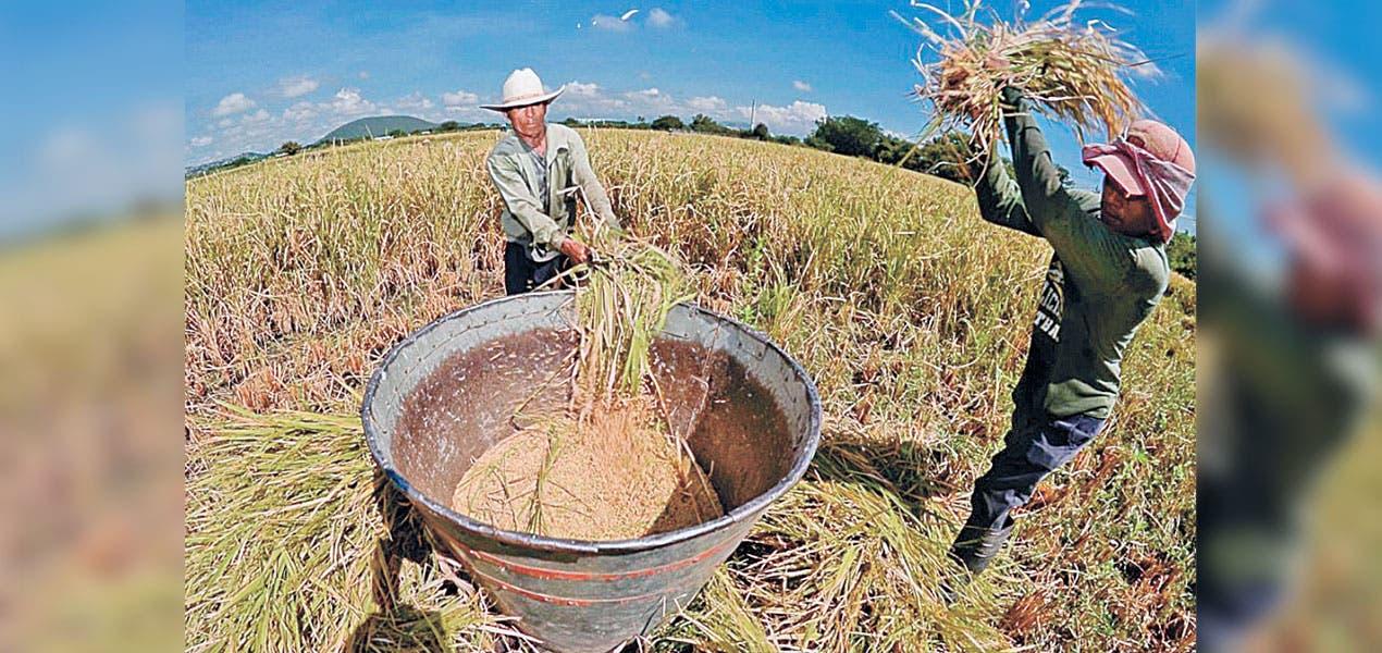 Convocan a programa de fertilizantes en Morelos