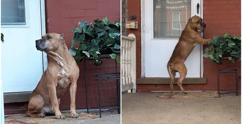 Abandonan a perrito tras mudarse de casa, los espera por 20 días