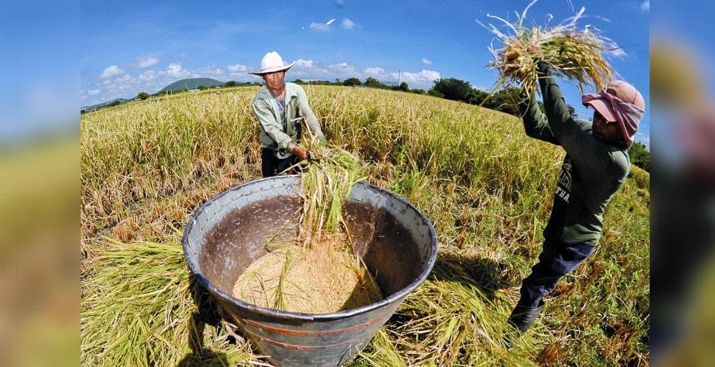 Técnicas. Agricultura protegida, invernaderos, semillas mejoradas y uso de fertilizantes, las herramientas de los productores