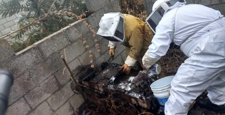 Atacan abejas a 6 integrantes de una familia en Cuernavaca