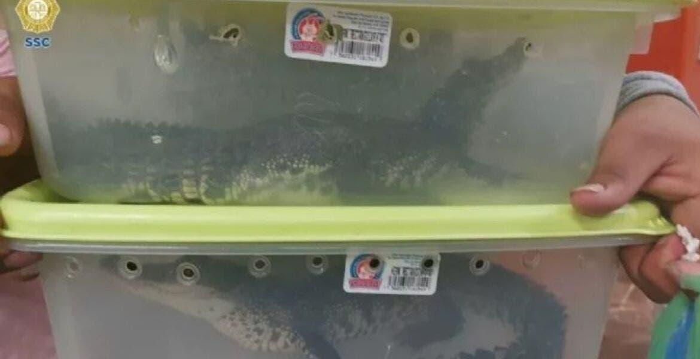 Trasladaban cocodrilos en el metro de CDMX