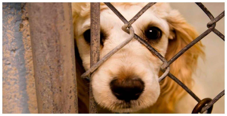Diputada propone hasta 5 años de cárcel por maltrato animal