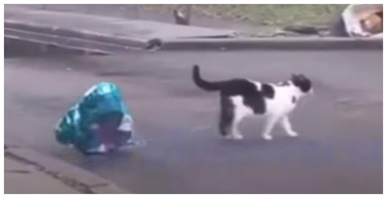 Gatito enamorado, le lleva globo a su pareja