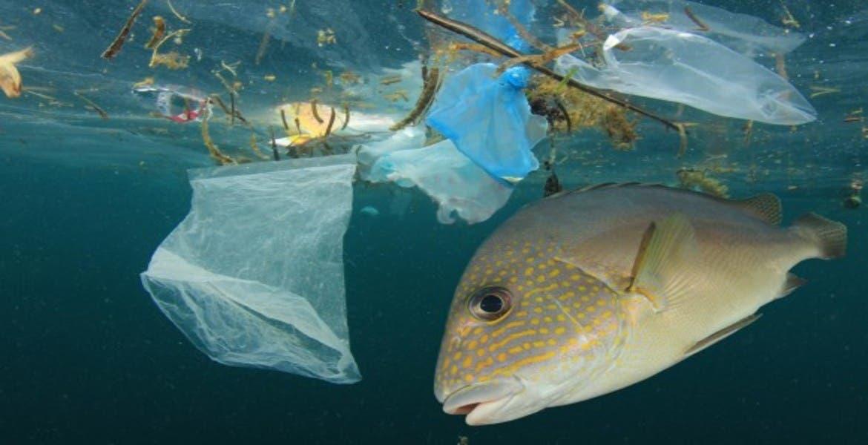 Resultado de imagen para tapas plásticas dentro de un pez
