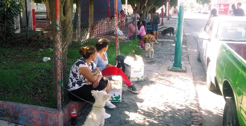 Gratuitas. La atención a las mascotas no tiene ningún costo; exhortan a dueños a ser responsables.