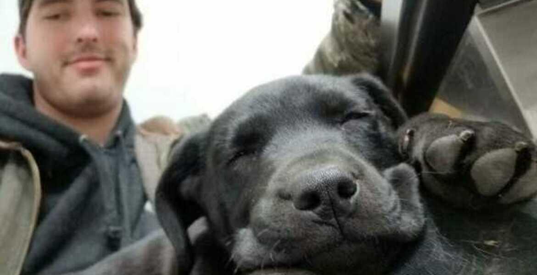 Joven sordo enseña lengua de señas a perrito sordo que rescató