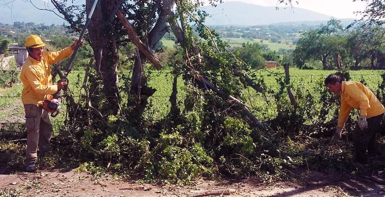 Labores. Personal de Protección Civil y de Contingencias Ambientales trabajaron para retirar 22 árboles que colapsaron en Miacatlán.