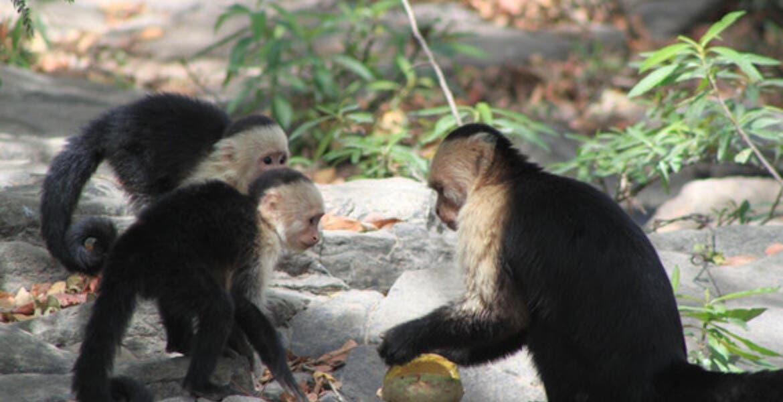 """Monos """"asaltan"""" a trabajador y se roban muestras que dieron positivo a COVID-19"""
