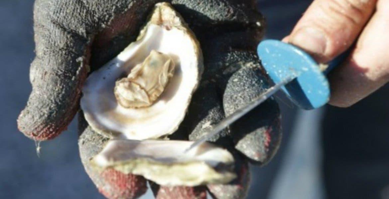 Fallece mujer por comer ostras