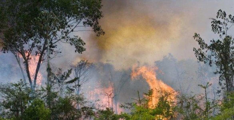 Resultado de imagen para NASA muestra  la Amazonía