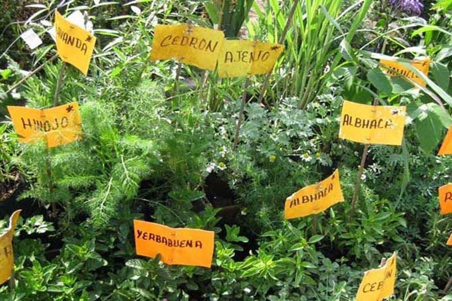 Plantas medicinales en México están en peligro de ...