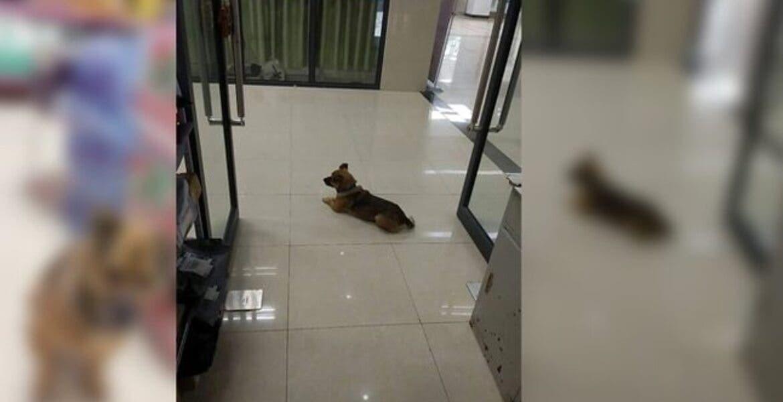 Perrito lleva más de 3 meses esperando a su dueño que falleció por COVID-19