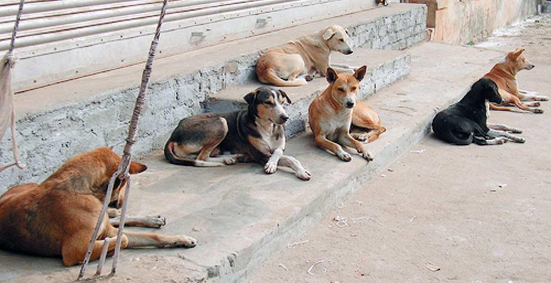 Recomiendan. Autoridades exhortan a las personas a esterilizar a sus mascotas para evitar que aumente la población de perros y gatos.