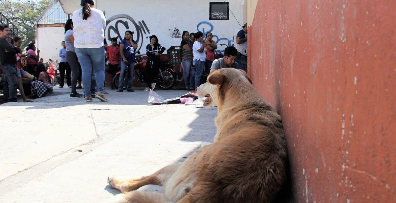 Preocupa en Ayala peleas al interior de planteles, no de estudiantes, sino de… ¡perros!