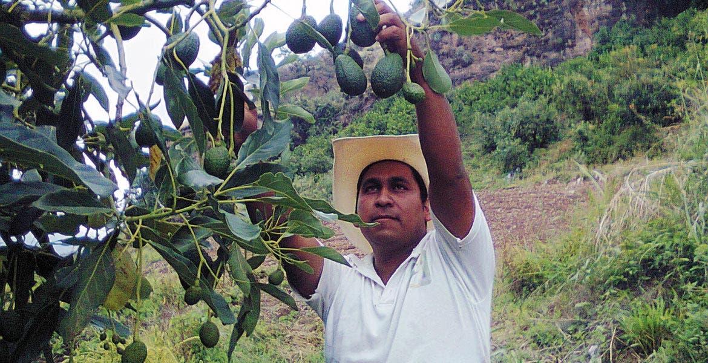 Incremento. Pese a que Morelos es productor de aguacate, el producto ha aumentado su precio significativamente durante el año.