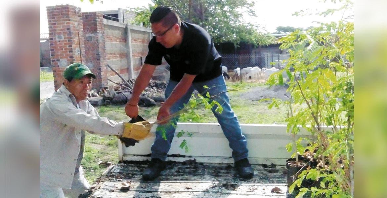 Listos. Miles de árboles endémicos están disponibles para plantar en Cuernavaca, dentro del programa de reforestación