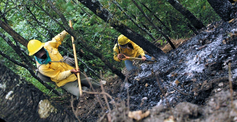 Combate. En lo que va del año se han presentado 92 incendios con una afectación de 494.52 hectáreas.