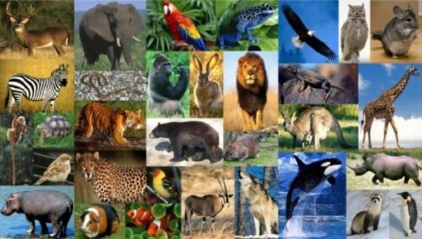 ¡Feliz día de los animales! ¿Por qué se celebra?