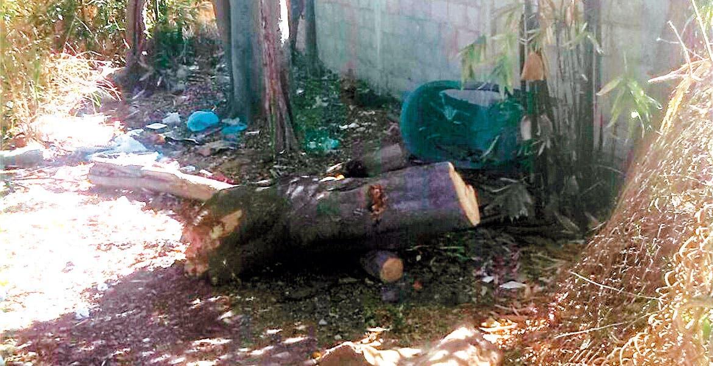 Daños. El árbol cayó sobre cables de electricidad; trabajadores de la CFE y los propios colonos se encargaron de retirar las ramas.
