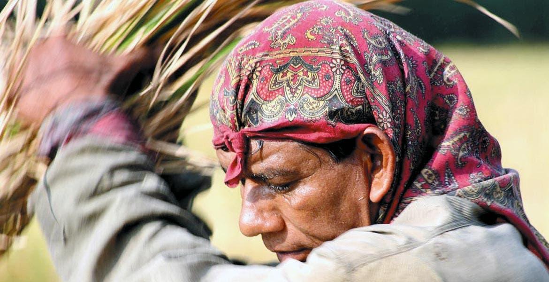 Desde 2009. En la exposición Los hombres del arroz, Eduardo del Conde da cuenta de la labor de los jornaleros del sur del estado de Morelos.
