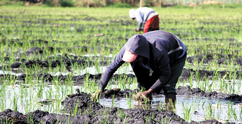 Campo. Con la recolección de envases de plaguicidas se busca tener tierras limpias sin contaminantes para tener mejores cosechas.