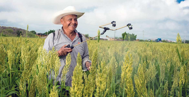 Medidas. Al menos 50 mil hectáreas de sorgo y maíz fueron aseguridas contra daños catastróficos en 2016.