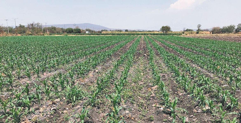 Limpiarán el campo de morelos de envases de agroquímicos