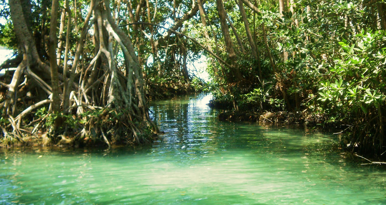 México se inscribe entre los cinco países del mundo con mayor extensión de manglares