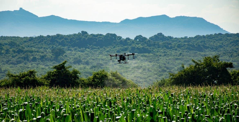 Ayudarán drones a mejorar cosechas en Tepoztlán