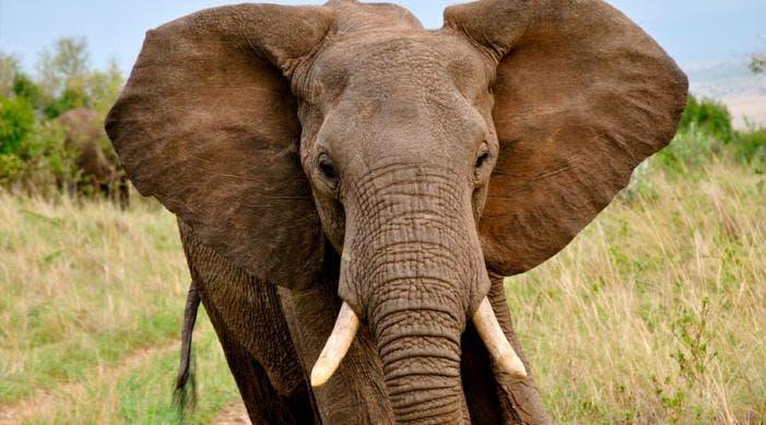 Elefante mató a cazador argentino en Namibia