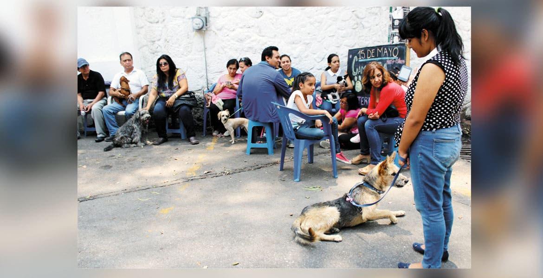 Campaña. Autoridades de Salud acudieron al Parque Barranca de Chapultepec para realizar cirugías en canes y mininos.