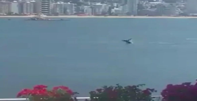 Una ballena disfruta de la  bahía de Acapulco.
