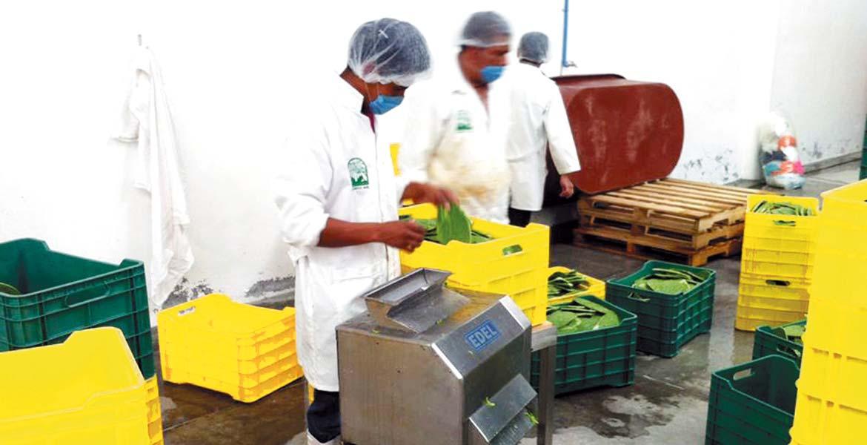 Respaldo. Empresas en todo el estado han sido beneficiadas con recursos del Fondo Morelos, para desarrollar su capacidad de producción y comercialización.