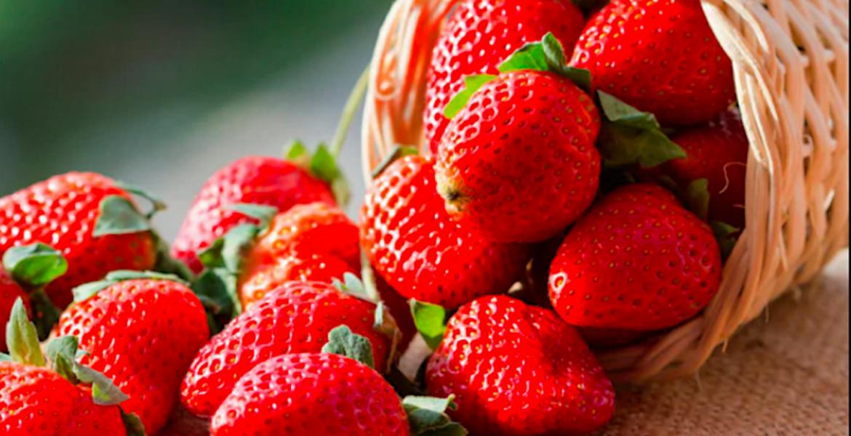 Es México primer lugar en exportación de fresa en el mundo