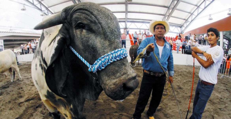 Expo. Lo mejor del ganado del país se expondrá en la Expo Nacional de la Industria Ganadera y Pecuaria.