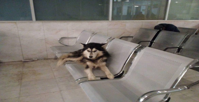 Perro espera salida de su dueño que llegó a la Clínica 6