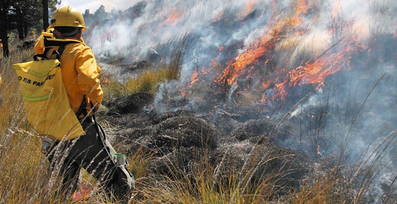 Afectadas, casi 100 hectáreas por incendios en Veracruz: Conafor