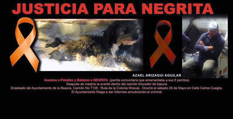 Difusión. En redes sociales circuló la foto de la perrita que fue agredida por un sujeto llamado Azael, quien laboraba para el Ayuntamiento de Cuernavaca.