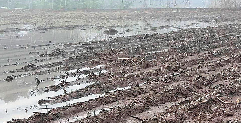 Ocasionan lluvias y granizadas daños a cultivos de maíz y sorgo en Axochiapan