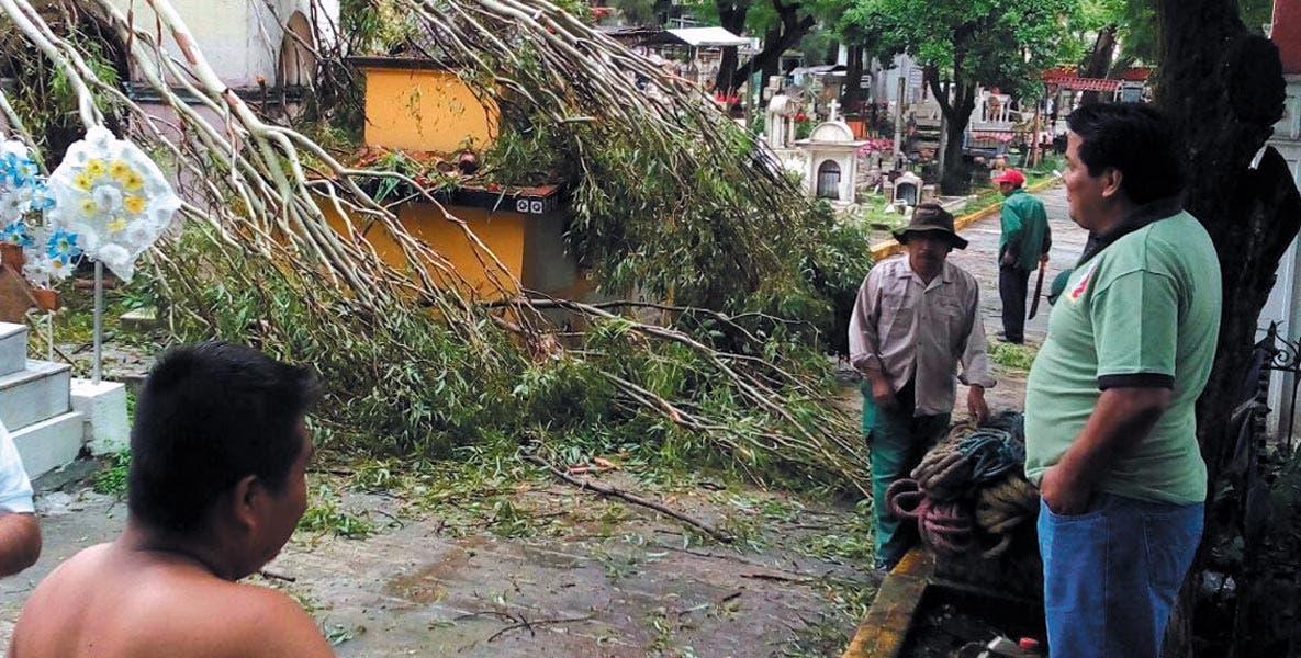 La Leona. Con daños resultaron mausoleos tras la caídad de árboles.
