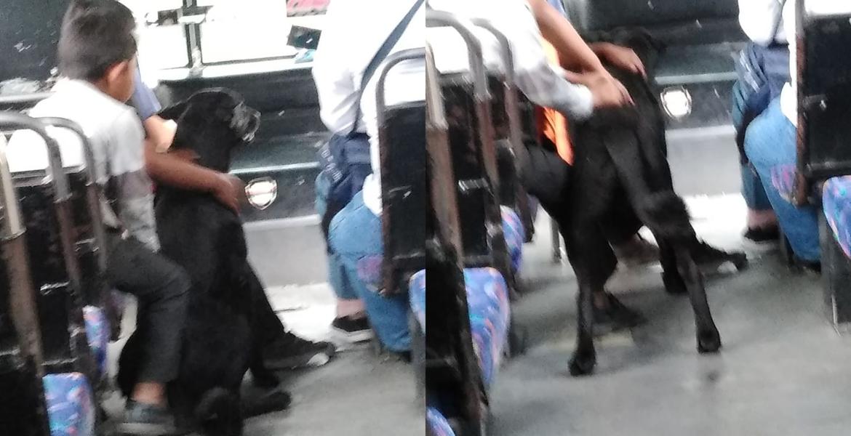 Conmueve chofer que deja a 3 niños subir a Ruta junto con su perrito