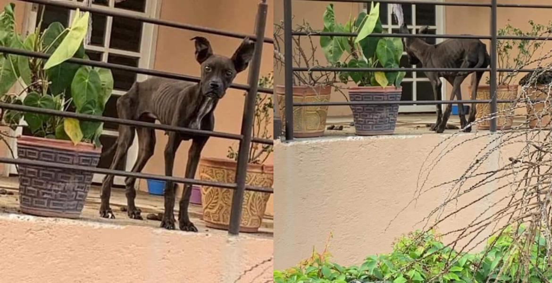 Imagen de perro famélico en Cuernavaca conmueve en las redes sociales