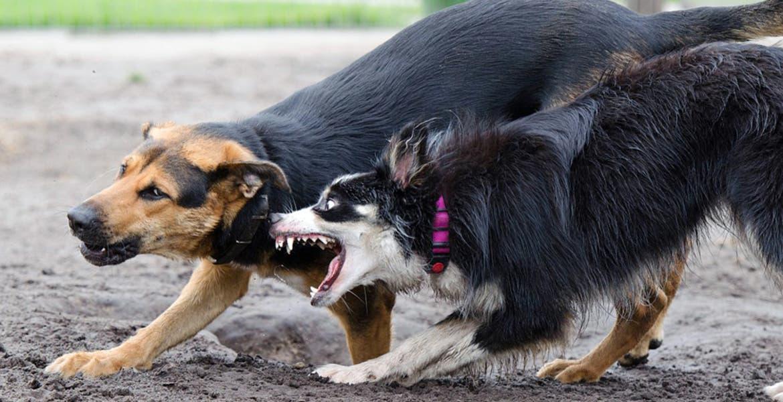 Estudio demuestra que los perros son rencorosos