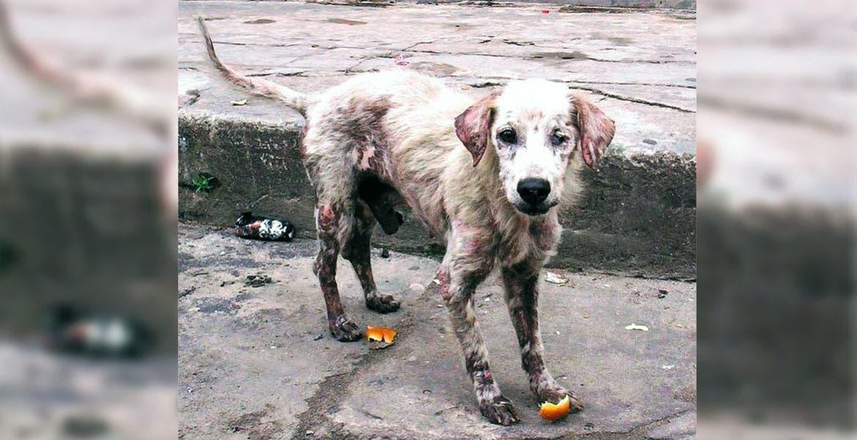 Señalamiento. Ciudadanos exigieron penas más severas para quien dañe una mascota, mientras que el diputado Edwin Brito aceptó que falta legislar para incluir castigos para quienes cometan una negligencia médica veterinaria.