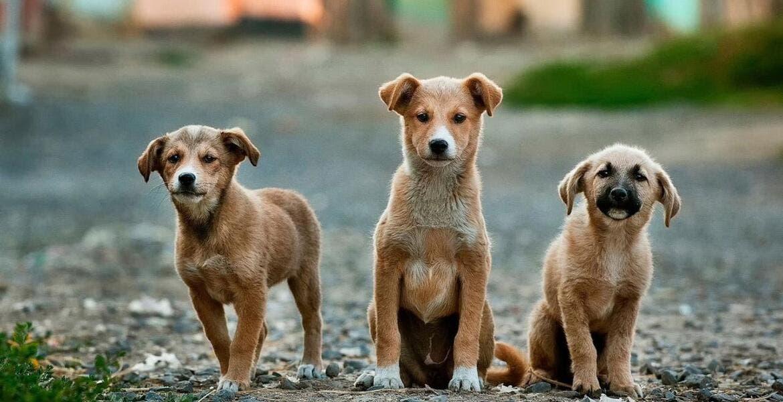 Apoya Ayuntamiento con rescate de 20 perros en Cuernavaca