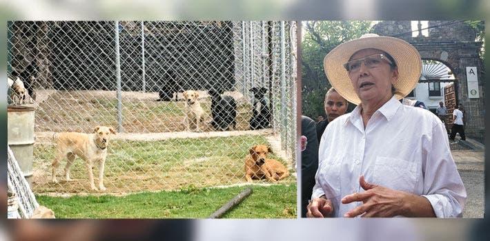 Postura. Dora Anaya acudió a la residencia de Gobierno a reclamar sus perros, pero no quiso ir al albergue.