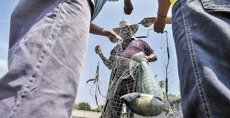 Llaman a consumir pescado de Morelos